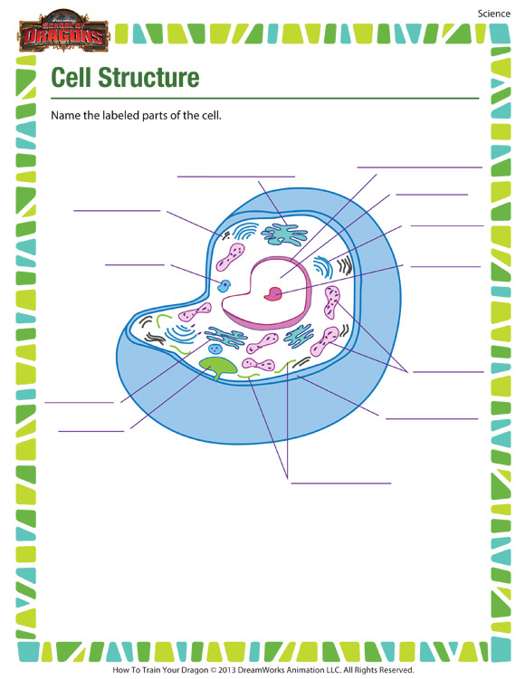 cell structure free cell worksheet for 7th grade kids