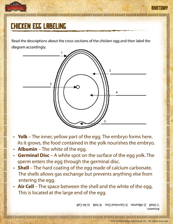Chicken Egg Labeling View Printable Science Worksheet For 4th