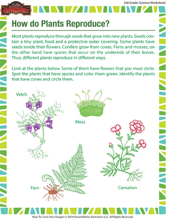 How Do Plants Reproduce Worksheet Grade 3 Printable Sod