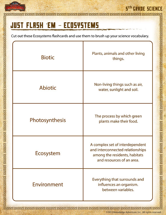 Just Flash 'em Ecosystems View – 5th Grade Worksheet – SoD