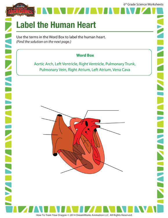 Label the Human Heart - Free Online Science Worksheet for Sixth Grade