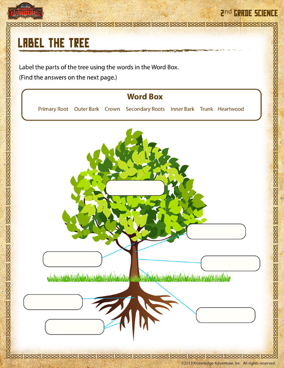 Label the Tree - Printable Science Worksheet for 2nd Grade