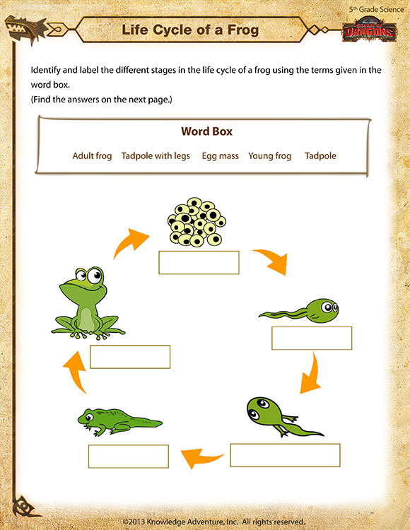 Life Cycle Of A Frog View Free 5th Grade Science Worksheet