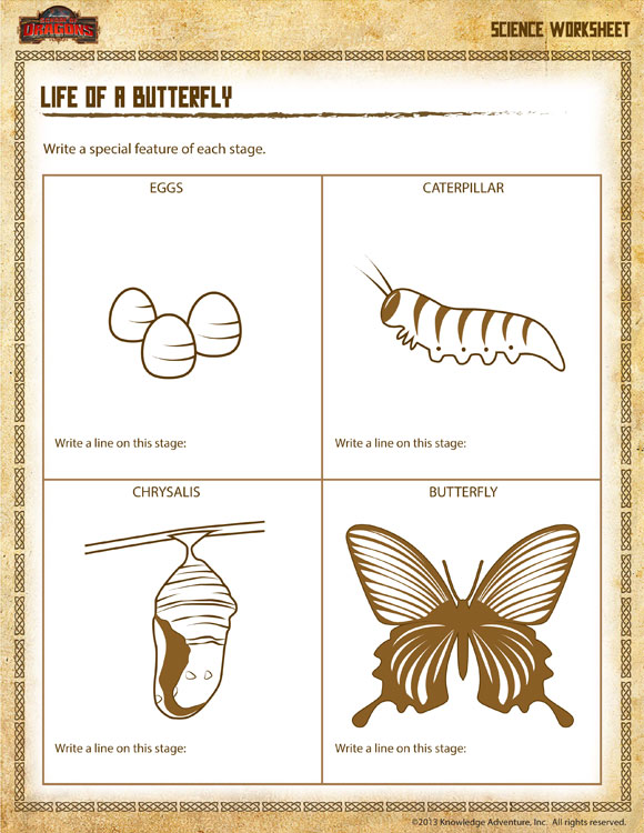Life of a Butterfly - Printable Science Worksheet for 2nd Grade