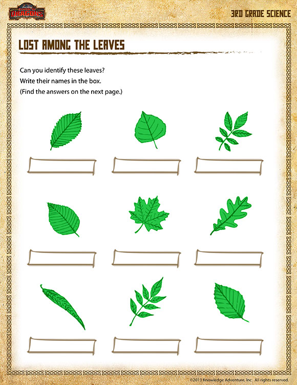Lost Among The Leaves View 3rd Grade Science Worksheet