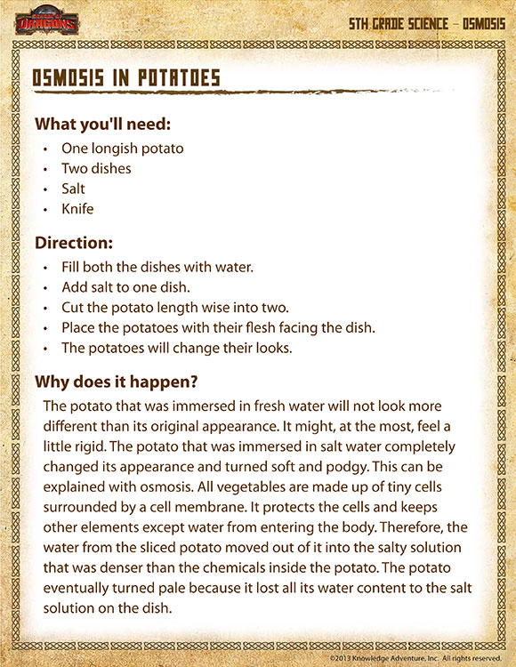 Osmosis in Potatoes - Printable Science Experiments for 5th Grade