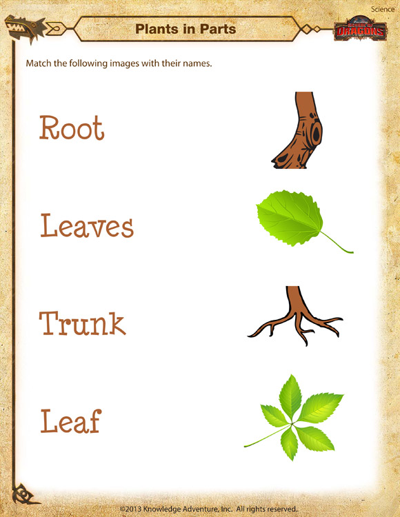 Plants in Parts Kindergarten Science Worksheet School of Dragons – Kindergarten Science Worksheet