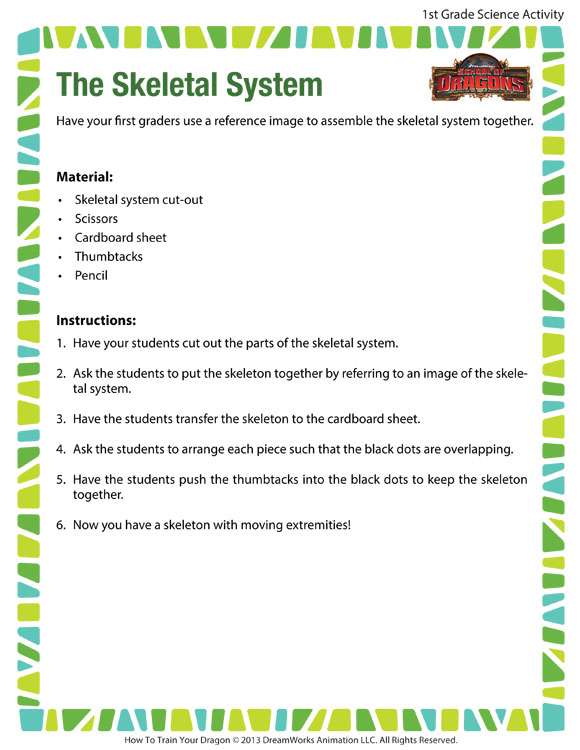 The Skeletal System View Science Activity For Kids SoD