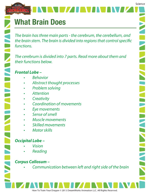 Science Worksheets For 5th Graders : What brain does printable th grade science worksheet