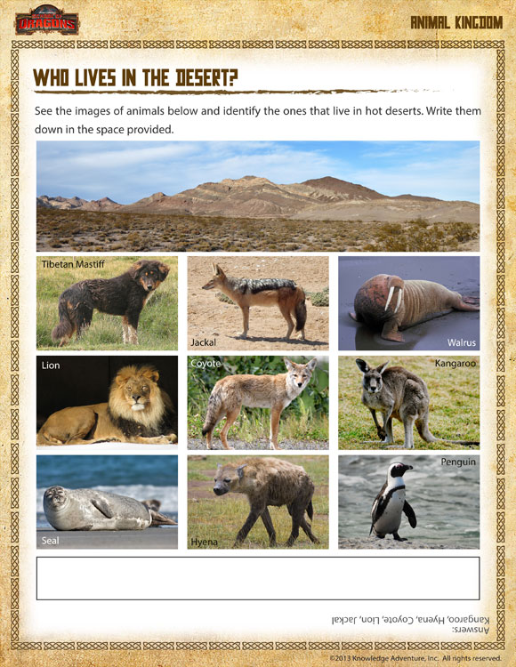 Who Lives In The Desert View Fun Habitat Worksheet For 1st Grade. Who Lives In The Desert First Grade Science Worksheet For Kids. Kindergarten. Where Animals Live Worksheets For Kindergarten At Clickcart.co