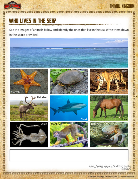 Who Lives In The Sea View Free 1st Grade Science Worksheet. Fun First Grade Science Worksheet. Worksheet. 1st Grade Science Worksheet At Clickcart.co