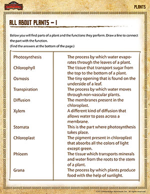 All about Plants – 1 - Printable 5th Grade Science Worksheet