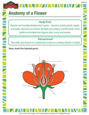Anatomy of a flower science printable for grade 4 anatomy of a flower printable 4th grade science worksheet ibookread