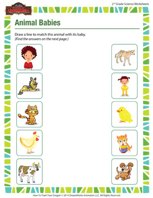 animal babies free science worksheet for 2nd grade school of dragons