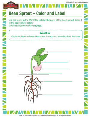 bean sprout color and label free science worksheet for 3rd grade rh schoolofdragons com Cartoon Beans lima bean diagram to label