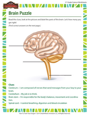 Brain Puzzle Biology For Fifth Grade School Of Dragons