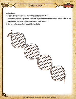 Printables Dna Worksheet color dna printable 7th grade science worksheet school of dragons dna