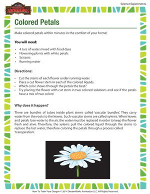 Colored Petals - Science Experiment for Kids