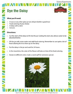 Dye the Daisy - Fun Science Experiment for Kids