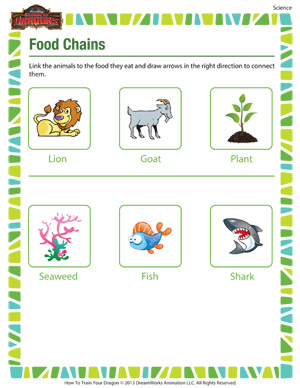 Printables Free Food Chain Worksheets food chains printable 2nd grade science worksheet chains