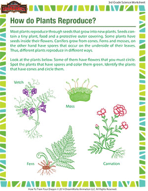 Science Worksheets For 3rd Grade Plants | worksheet example