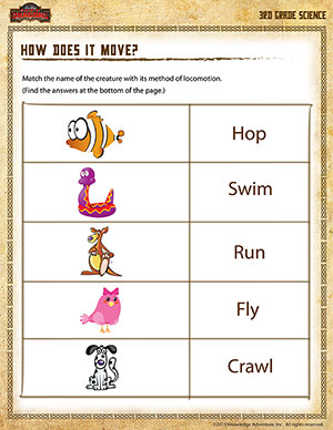 Worksheet Science Worksheets For 3rd Graders how does it move 3rd grade science worksheets printable worksheet