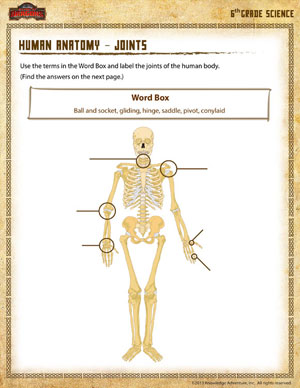 Human Anatomy \u2013 Joints - Printable Sixth Grade Science Worksheet