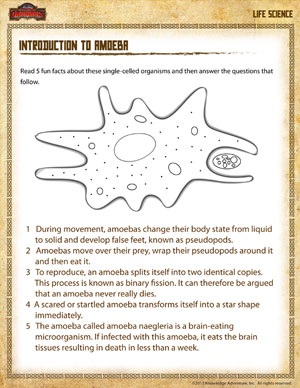 Introduction to Amoeba – Free Life Science Worksheet for Grade 4 ...
