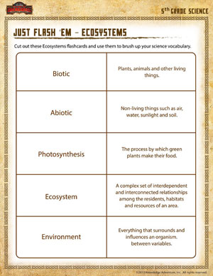 Printables Science Worksheets For 5th Graders just flash em 5th grade science worksheet school ecosystems printable fifth worksheet