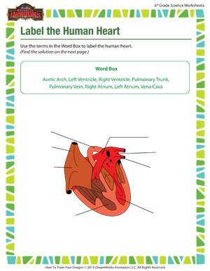 Human Heart Worksheets Sharebrowse
