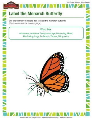 Printables Monarch Butterfly Worksheets label the monarch butterfly science worksheets and printables butterfly