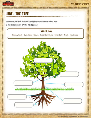 Printables Science Worksheets For 2nd Graders label the tree free science worksheet for 2nd grade school of printable second worksheet