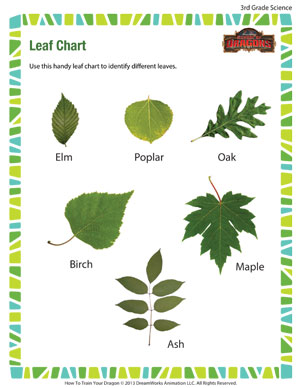Leaf Chart – Free Science Worksheet for 3rd Grade – School of ...