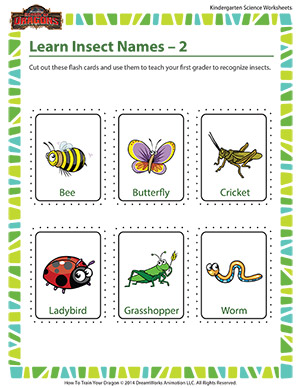 Learn Insect Names – 2 – Kindergarten Life Science Printable ...