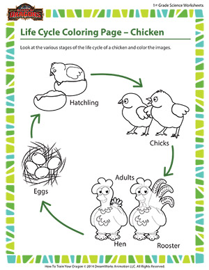Life Cycle Coloring Page – Chicken \\ 1st Grade Life Science ...