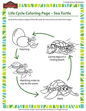 Life Cycle Coloring Page - Sea Turtle \ Science Printable \ School ...