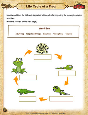 Life Cycle of a Frog - Printable 5th Grade Science Worksheet