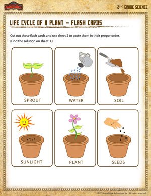 Life Cycle of a Plant \u2013 Flash Cards - Printable Second Grade Science Worksheet