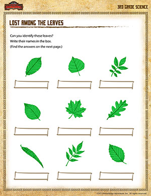 graphic relating to Leaf Shapes Printable titled Missing involving the Leaves - 3rd Quality Science Worksheets - SoD