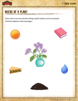 Needs of a Plant – 1st Grade Science Worksheet - School of Dragons