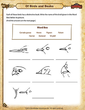 Worksheets 5th Grade Science Worksheets of birds and beaks 5th grade science worksheets online printable worksheet