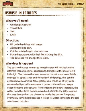 Osmosis in Potatoes - Printable Science Experiments for Fifth Grade
