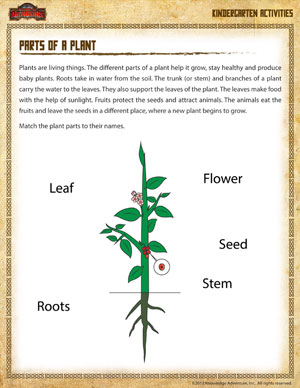 math worksheet : parts of a plant  science worksheet for kindergarten  school of  : Kindergarten Science Worksheets Free Printable
