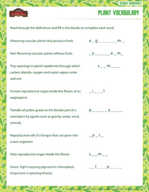Plant Vocabulary - Free 6th Grade Science Worksheet