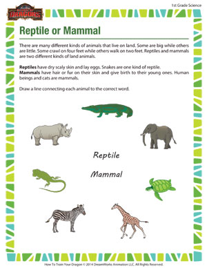 Printables Mammal Worksheets reptile or mammal 1st grade science worksheet school of dragons mammal