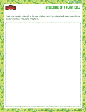 Printables Science Worksheets For 6th Grade structure of a plant cell printable sixth grade life science 6th worksheet
