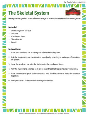 The Skeletal System - Printable First Grade Science Activity