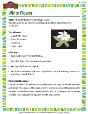 White Flower - 2nd grade science activity