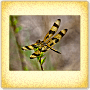 Dazzling Dragonflies - Free 4th Grade Science Worksheet
