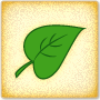 Guess the Leaf Shape - Learn more about leaves!